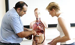 anatomy diploma training
